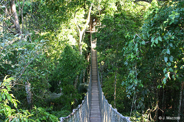 Canopy in Inkaterra Amazon Lodge