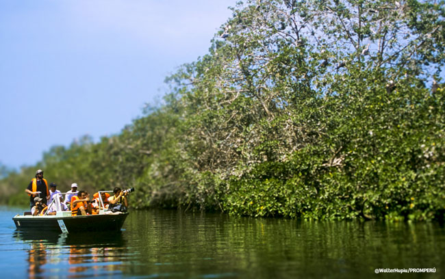 Mangroves of Tumbes National Sanctuary